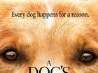 Autor de 'Quatro vidas de um cachorro' fala sobre vídeo polêmico