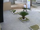 Homem furta pinheiro de jardim de lanchonete em Jacareí; veja vídeo
