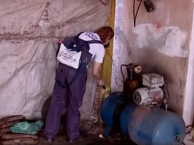 Agente de saúde fiscaliza casa em Rio Preto para encontrar criadouros (Foto: Reprodução/TV TEM)