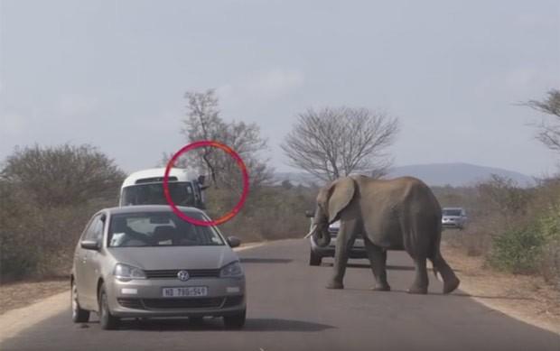 Ato poderia ter provocado um ataque dos animais (Foto: Reprodução/YouTube/Africa Adventures)