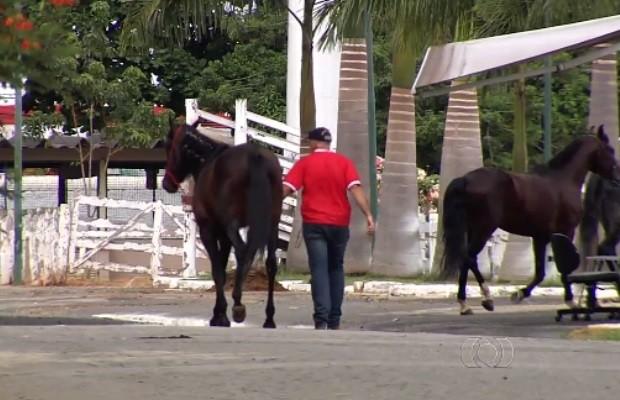 Cavalos são mantidos isolados após diagnóstico de mormo na Sociedade Goiana de Pecuária e Agricultura, em Goiânia (Foto: Reprodução/TV Anhanguera)