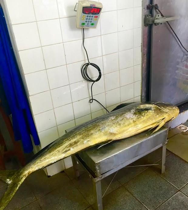 Balança aponta o peso do dourado pescado (Foto: Arquivo Pessoal)