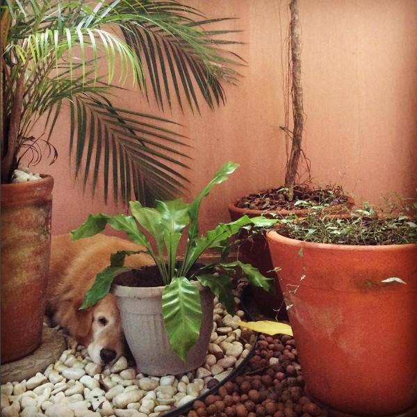O jardim da jornalista Maju Coutinho é puro charme (Foto: Reprodução/Instagram)