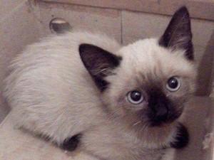 Gato abandonado em projeto que incentiva adoção em Piracicaba (Foto: Natalia Matsuka/Arquivo pessoal)