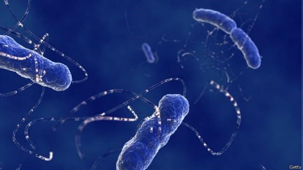 Bactérias como a e.coli têm apresentado aumento de resistência a medicamentos e poderão contribuir para um aumento de mortandade nos próximos anos  (Foto: BBC)