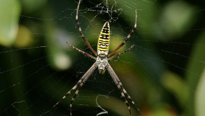 aranha-controle-biologico-horta (Foto: Creative Commons)