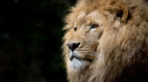 leão, imposto de renda, IR (Foto: Reprodução/Pexels)