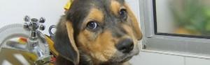 Saiba como os cães foram domesticados (Reprodução/TV TEM)