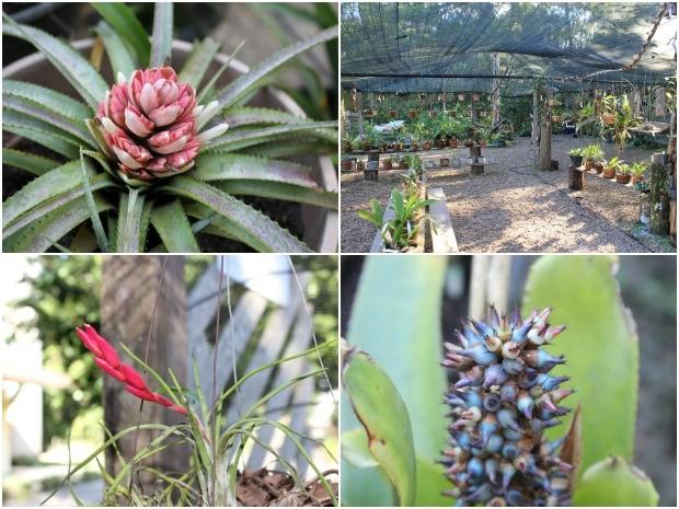 Espécies de bromélias encontradas nas coleções do Jardim Botânico (Foto: Tiago Melo/G1 AM)