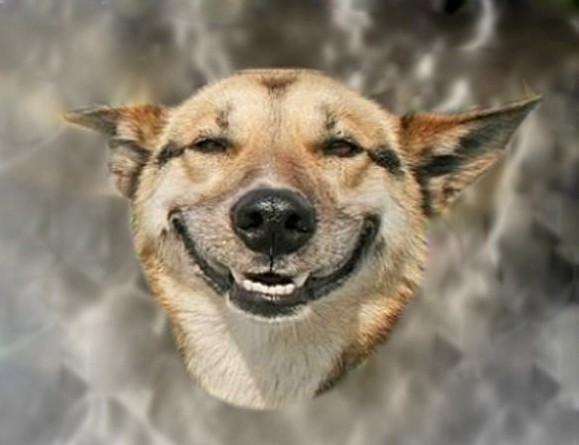 Cães e a ameaça das substâncias tóxicas (Foto: Reprodução)