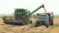 Produtores de arroz de Igreja Nova estão comemorando a colheita da safra