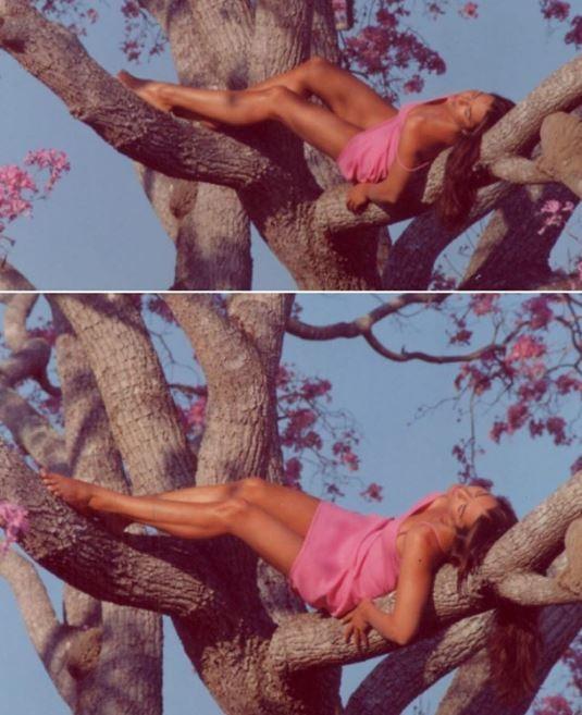 Luiza Brunet posta foto poética em árvore repleta de flores (Foto: Reprodução/Instagram)