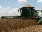Com medidas simples, produtor pode ampliar produção de soja em 20%