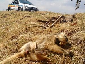 Macaco atropelado  (Foto: Polícia Militar de Meio Ambiente/Divulgação)