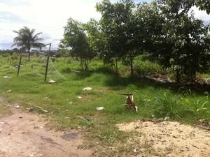 Filhotes foram resgatados nas proximidades de um campo de futebol (Fot Camila Henriques/G1 AM)