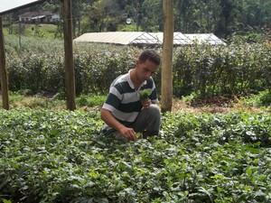 Willian, de Nova Friburgo, RJ, dedica-se à produção de crisântemos, monsenhores e rosas. (Foto: Paulo Filgueiras)