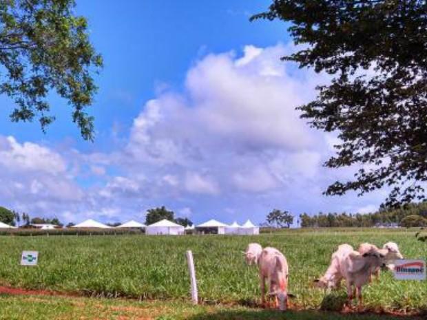 Área da Dinapec, na sede da Embrapa Agropecuária Oeste, em Campo Grande (MS) (Foto: Divulgação Embrapa Gado de Corte/Kadijah Suleiman)