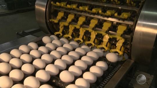 Produção de ovos aumenta 5,97% em seis meses na Bahia; consumo sobe