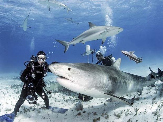 O fotógrafo brasileiro Daniel Botelho registrou tubarões-tigres de perto nas Bahamas (Foto: Daniel Botelho)