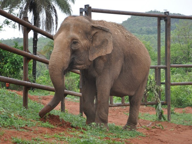 Santuário de elefantes fica em Chapada dos Guimarães (MT) (Foto: Carolina Holland/G1)