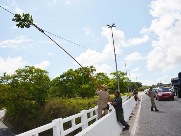 Bombeiros usaram vara com galho para resgatar preguiça em João Pessoa (Foto: Walter Paparazzo/G1)