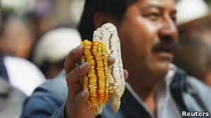 Dezoito variedade de milho transgênico são aprovadas para consumo no Brasil (Foto: Reuters)