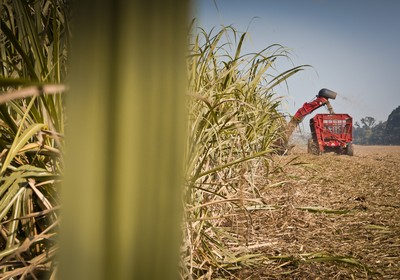 agricultura_cana_maquina (Foto: Guilber Hidaka/Ed. Globo)