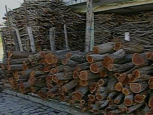 A Sudema estima que jeam comercializadas 165 toneladas de lenha neste mês em CG (Foto: Reprodução/TV Paraíba)