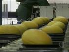 Fruticultores do RN fecham contrato com a Ásia para exportação de melão