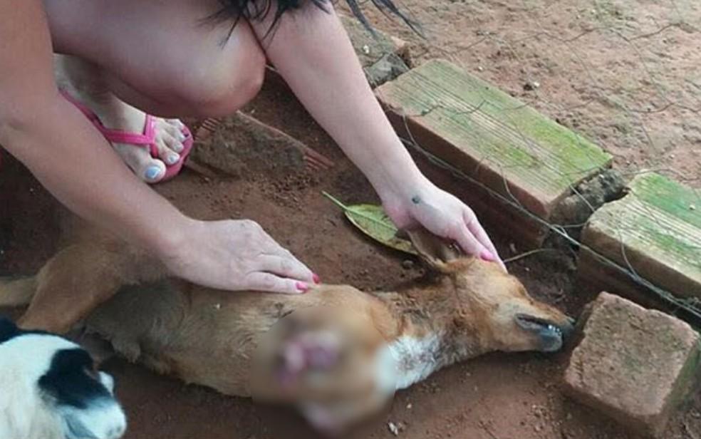 Cachorro teve patas cortadas fora com um podão, não resistiu aos ferimentos e morreu em Iporá Goiás (Foto: Divulgação/Polícia Civil)