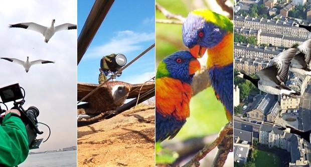 Globo Repórter viaja em aventuras pelo mundo nas asas dos pássaros (Foto: Reprodução / TV Diário)