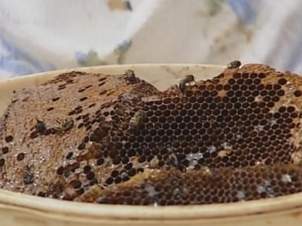 Favos serão usados para fazer pão de mel (Foto: Reprodução / TV TEM)
