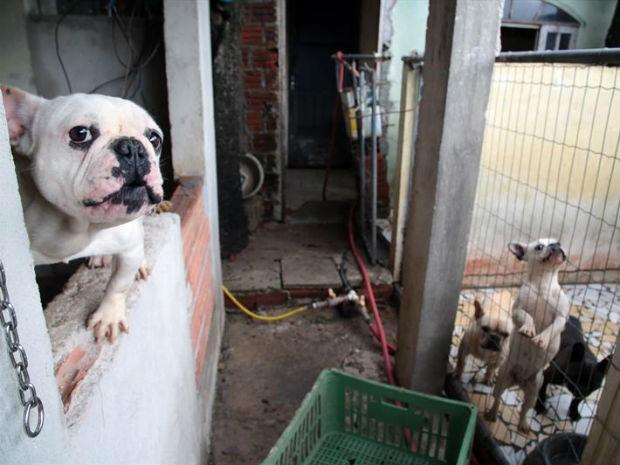 Foram encontrados 119 cães no estabelecimento (Foto: Jaelson Lucas/Divulgação SMCS)