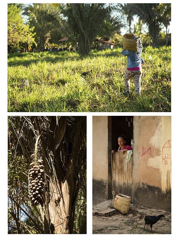 Os frutos do Babaçu, moradora da comunidade de Ludovico e quebradeira carrega cesta com a colheita (Foto: Marcio Scavone)