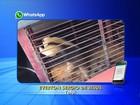 Tamanduá-mirim é resgatado após entrar em loja no centro de Tatuí