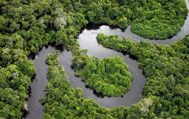 Tecnologia;Meio Ambiente;Fiscalização O programa ajudará a combater a exploração ilegal (Foto: Getty Images)