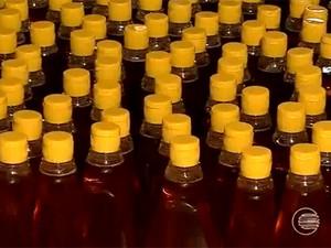 Apicultores piauienses estão confiantes com a produção de mel  (Foto: Reprodução/TV Clube)