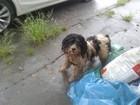 'Pressa' faz vereadores revalidarem  sacrifício de animais de rua em SC
