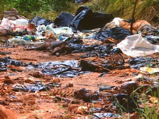 Moradores afirmam que cerca de 200 carcaças de animais estão depositadas de forma irregular em área de proteção ambiental em Cajuru (SP) (Foto: Cesar Tadeu/ EPTV)