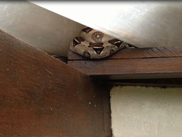 Cobra estava escondida no telhado da varanda (Foto: Reprodução / TV Bahia)