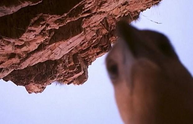 Entre as imagens, a ave de rapina registrou um autorretrato  (Foto: Kimberley Land Council/AP)