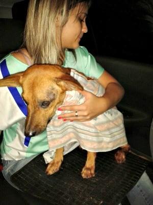 Cachorro passou por cirurgia (Foto: Vanessa Facundes / Arquivo Pessoal)