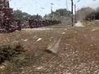Invasão de gafanhotos destrói 7 mil 'Maracanãs' na Rússia