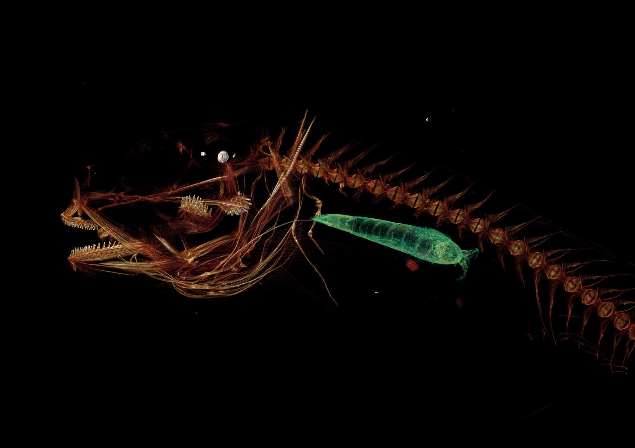 Escaneamento 3D do peixe Mariana (Foto: Universidade de Washington)