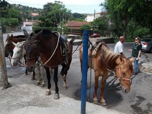 Alguns animais apresentam maus tratos (Foto: Divulgação/PMP)