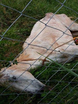 Animal foi abandonado em terreno pelo dono. Rio Preto (Foto: TEM Você)