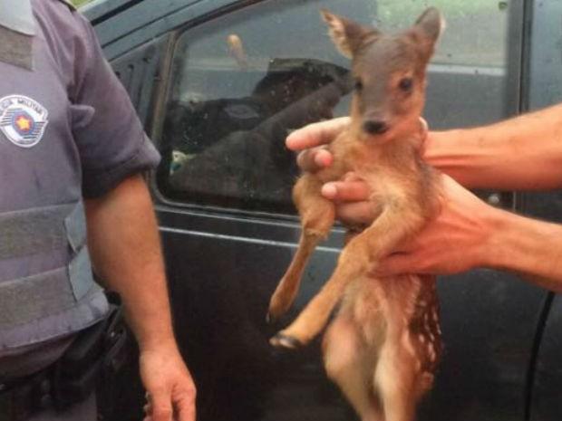 Animal foi encaminhado para clínica veterinária (Foto: Polícia Militar/Divulgação)