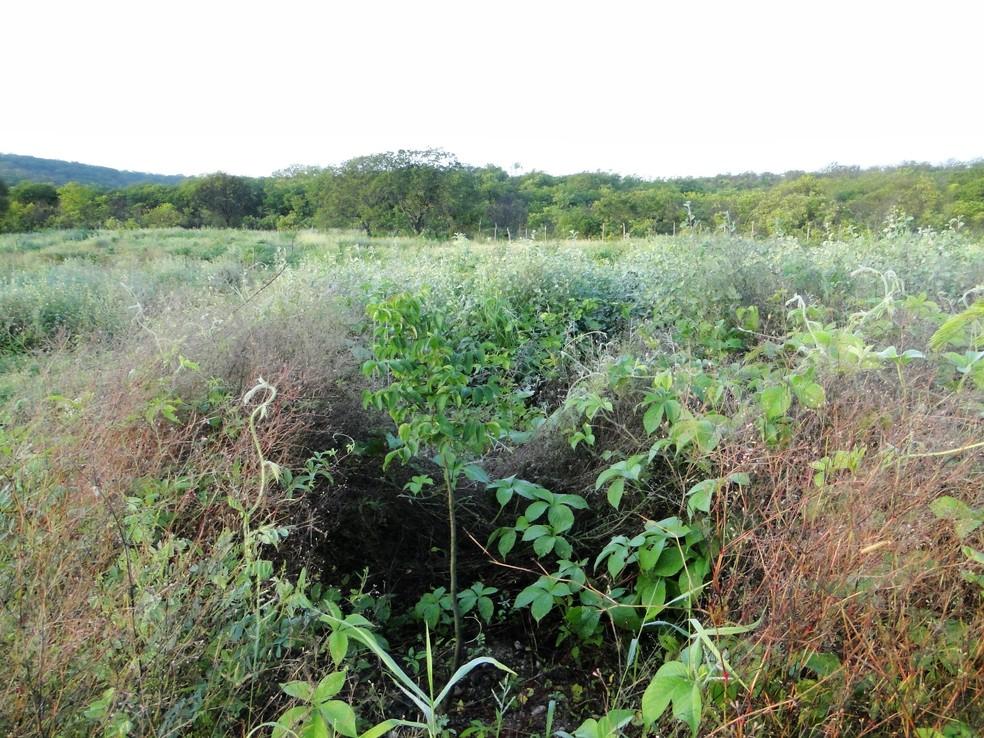 No Rn, trabalho é desenvolvido em uma área de 3,5 hectares da Floresta Nacional de Assu (Foto: Divulgação/UFRN)