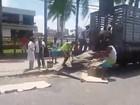 Cavalo ferido cai no asfalto na Avenida Agamenon Magalhães