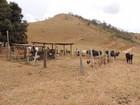 Dez pessoas são presas por furto de gado em operação no Leste de MG
